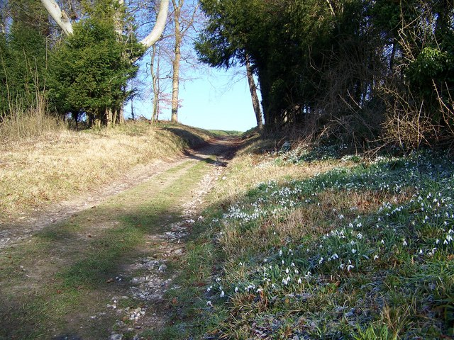 Bridleway near Keeper's Cottage