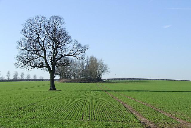 Crop Fields west of Seisdon, Staffordshire