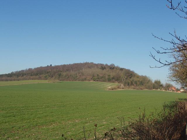 Ridge Wood, near Hambleden