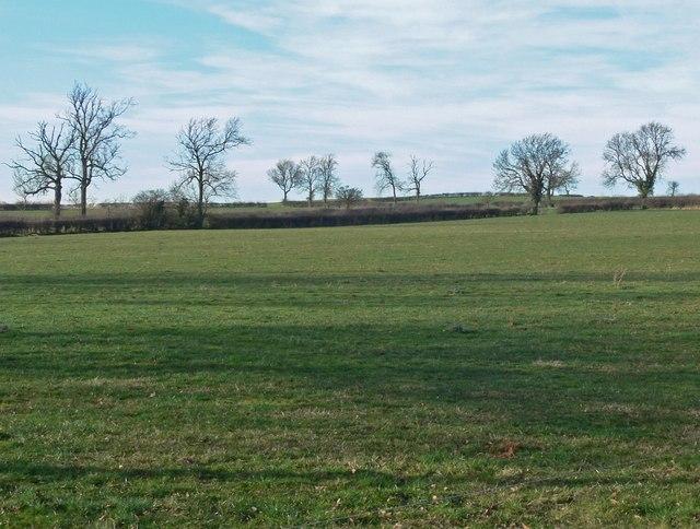Fields next to Twycross Road