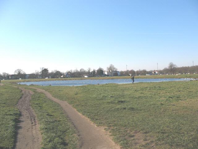 Pond on Wimbledon Common