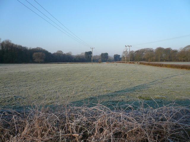 Looking across fields