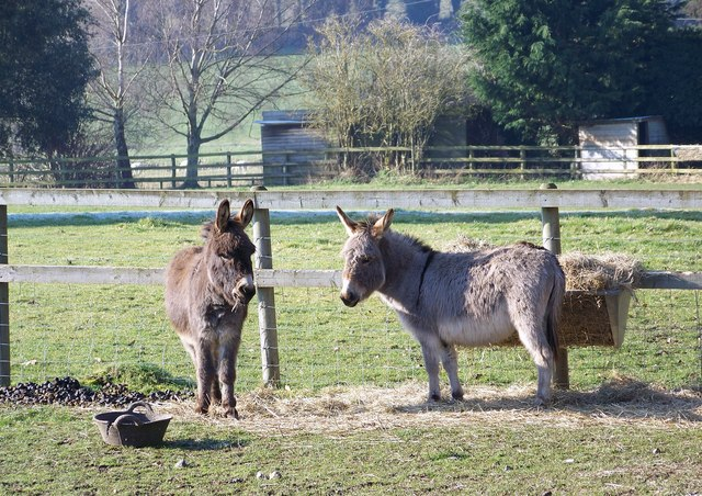 Donkeys at Little Durnford Manor