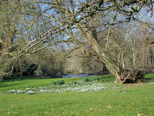 Snowdrops, Little Durnford Manor