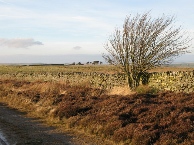 Pastures north of the track to Stobb Cross