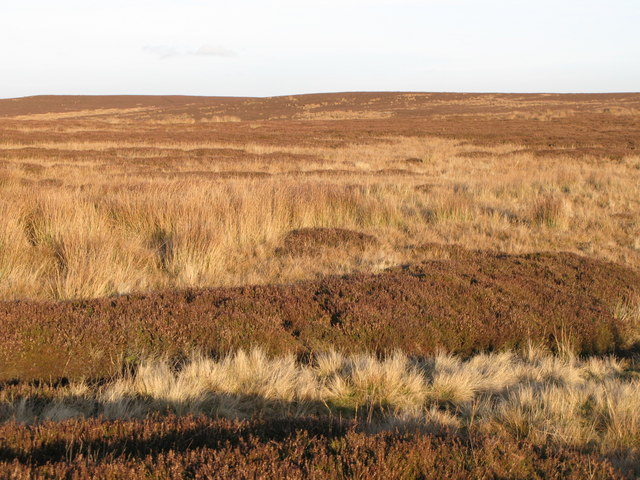 Moorland west of Stobb Cross