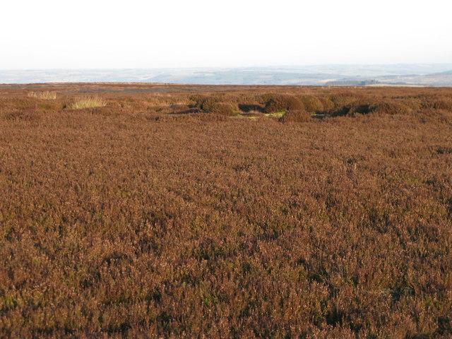 Hexhamshire Common (2)