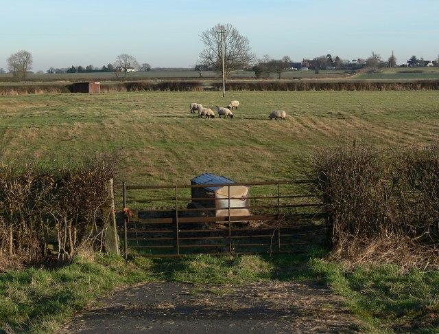 Farmland near Sibson, Leicestershire