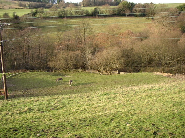 Donkeys grazing in the Black Brook valley, Stainland
