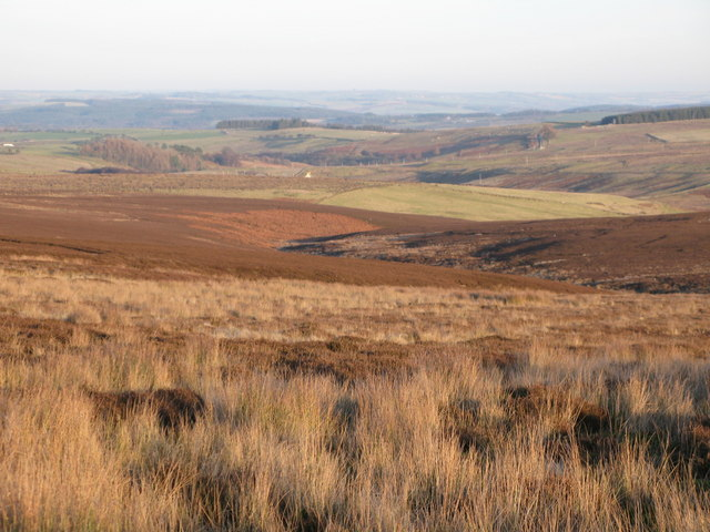 Moorland above the cleugh of Embley Sike