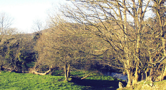 The tree lined Afon Erch below the old mill at Llwyndyrys