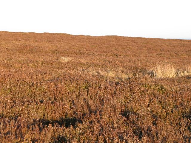 Westburnhope Moor below Stobb Cross