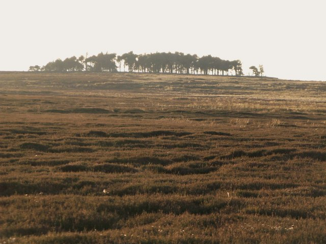 Moorland below the plantation on Green Hill