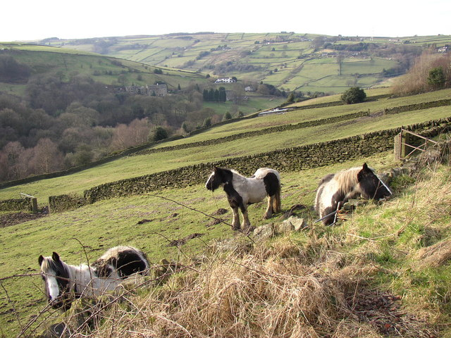 Horses and view of the valley, Stainland