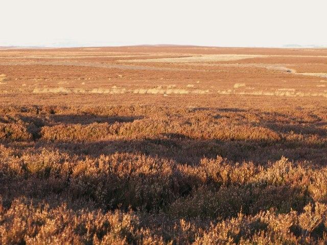 Moorland northwest of Stobb Cross