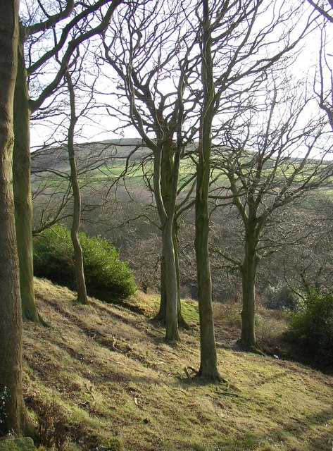 Wood pasture, Stainland
