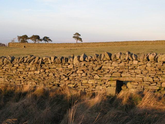 Sheephole near The Spittal