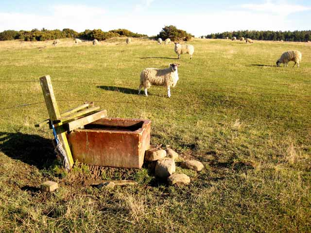 Water trough and pasture near West Farm above Corbridge
