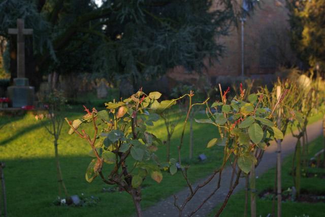 Bilton Churchyard