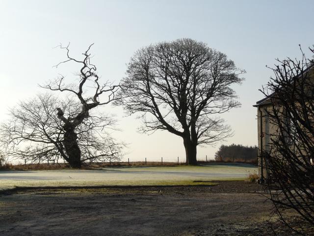 Trees at Cadboll Cottage