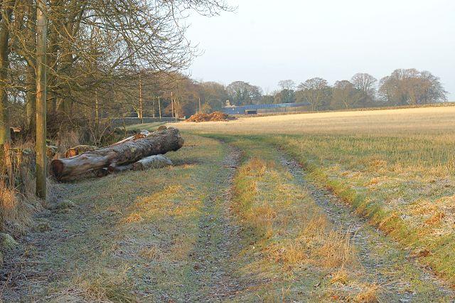 Farm road to Greigston