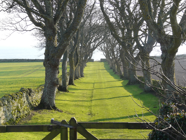 The superb avenue from Glenmorangie House to the shore.