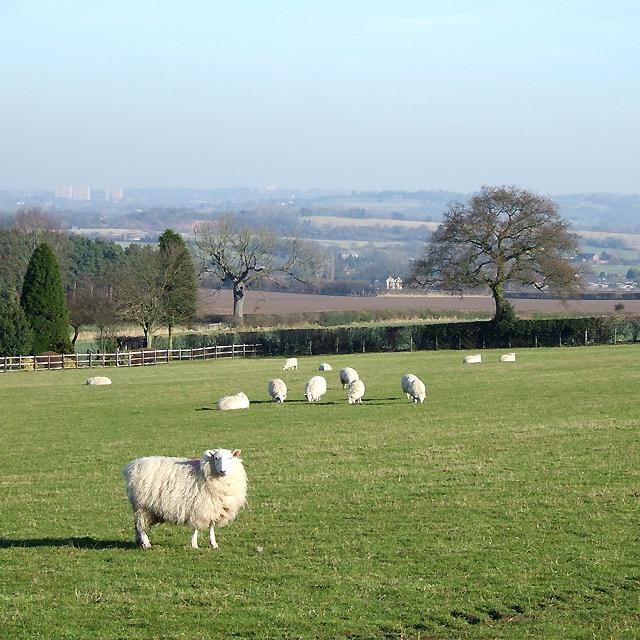 Staffordshire Farm Land near Seisdon