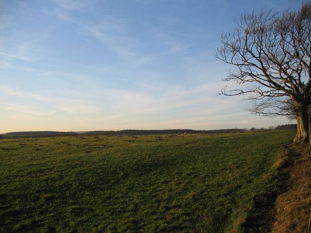 Grazing land near Hawknestrig