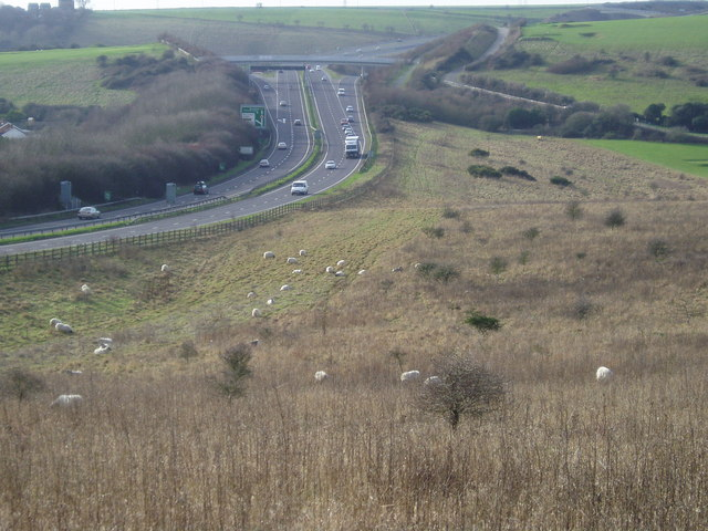 Field of sheep near A27(T)