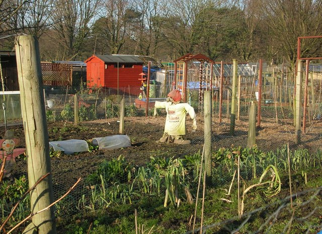 Allotments in winter