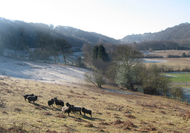 Black sheep in the Hope Valley