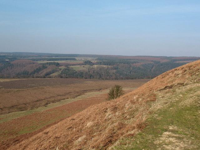 Hill and Dale near Levisham