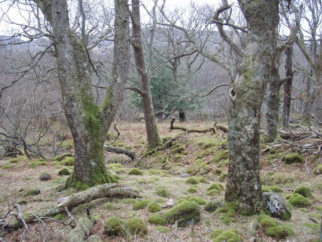 Talladale Woodland