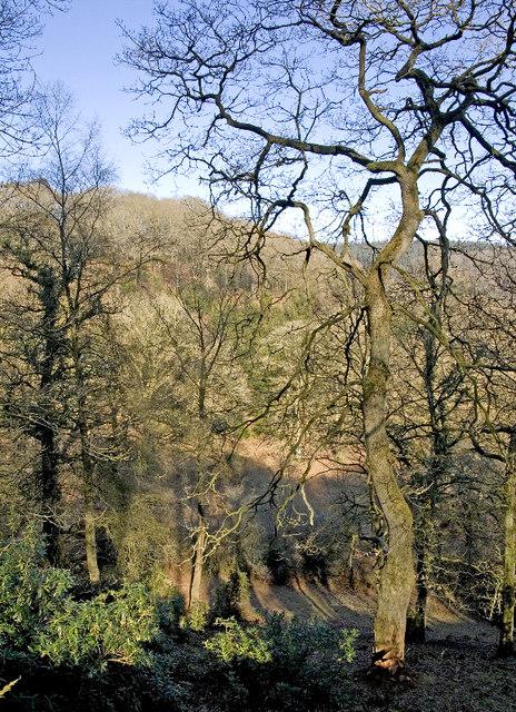 Lyncombe Wood