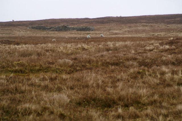 Moorland at Kirkabister