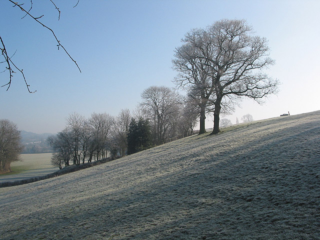 Frosty hillside