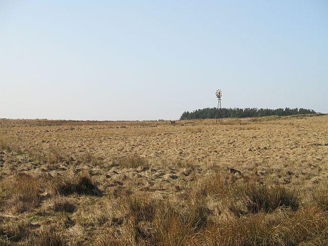 Wind pump, Botany