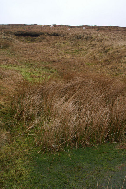 Moorland on Colvister Hill