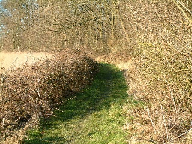 Path alongside Hougham Wood