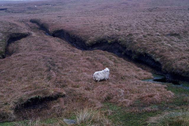 Abandoned peat bank