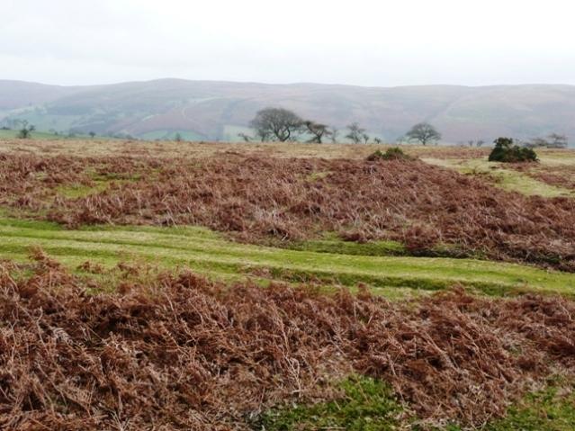 Moorland above the Edw