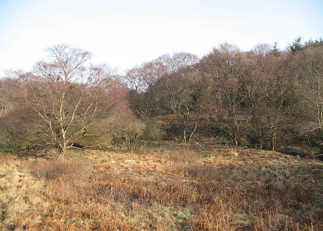 Woodland, Sandyford Burn