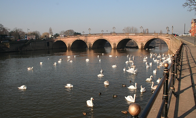 Swans by Worcester Bridge
