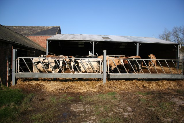 Manor Farm Cattle