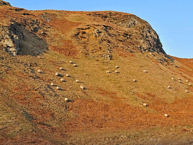 Sheep on Hillside