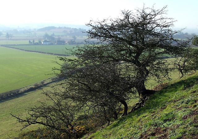 Fields near Upper Aston, Shropshire
