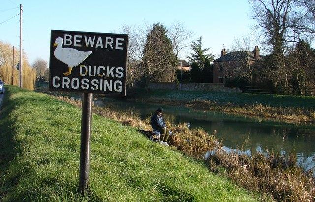 Beware of the Ducks