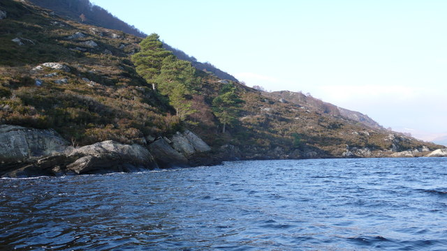 Caledonian Pines, Loch Luichart