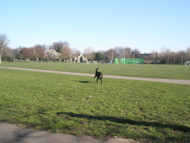Canine frolics in the winter sunshine