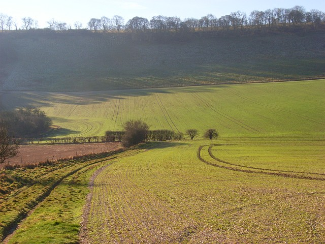 Conholt Bottom